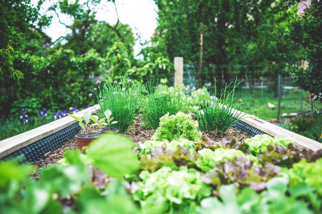 Herbal Garden Bed